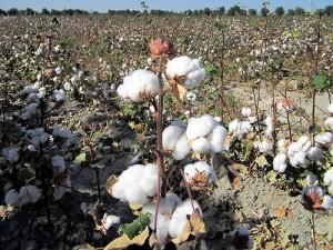 Organic Cotton Womens Tees