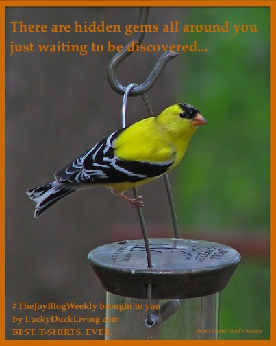Goldfinch.Facebook