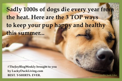 Keep dogs cool, Dog care in summer