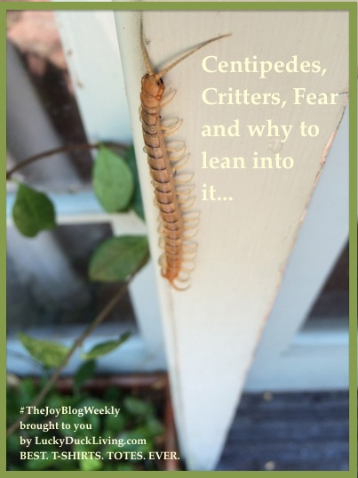 CentipedeFear.FB